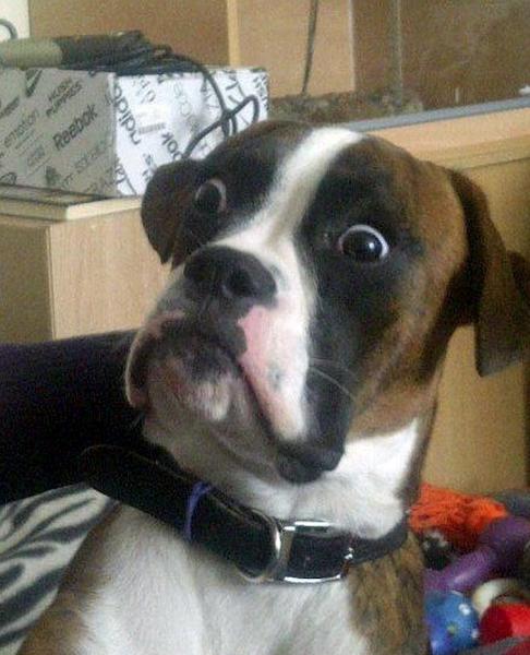 Shocked looking dog